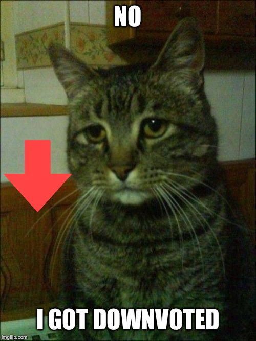 Depressed Cat |  NO; I GOT DOWNVOTED | image tagged in memes,depressed cat | made w/ Imgflip meme maker