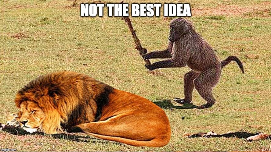 monkey business |  NOT THE BEST IDEA | image tagged in baboon,lion,sleeping,animals,monkey | made w/ Imgflip meme maker