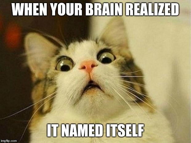 Scared Cat Meme | WHEN YOUR BRAIN REALIZED IT NAMED ITSELF | image tagged in memes,scared cat | made w/ Imgflip meme maker