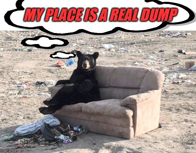 Looks like Yogi fell on hard times | MY PLACE IS A REAL DUMP | image tagged in bear,dump,hard times,funny meme,tough | made w/ Imgflip meme maker