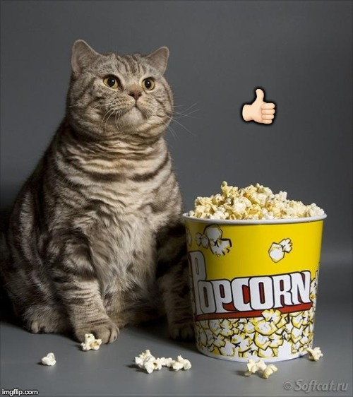 Cat eating popcorn | ?? | image tagged in cat eating popcorn | made w/ Imgflip meme maker