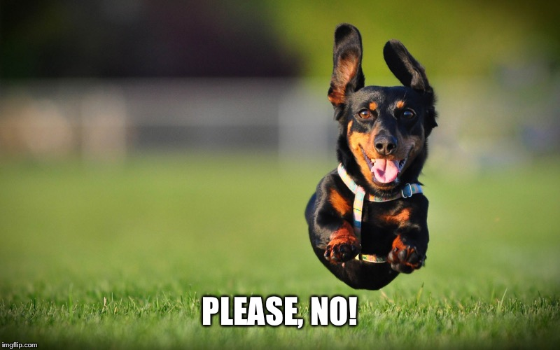 Dog Running | PLEASE, NO! | image tagged in dog running | made w/ Imgflip meme maker