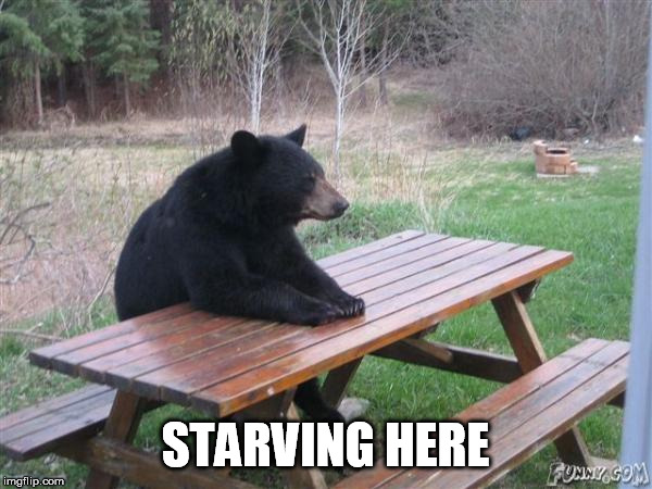 Bear Waiting | STARVING HERE | image tagged in bear waiting | made w/ Imgflip meme maker