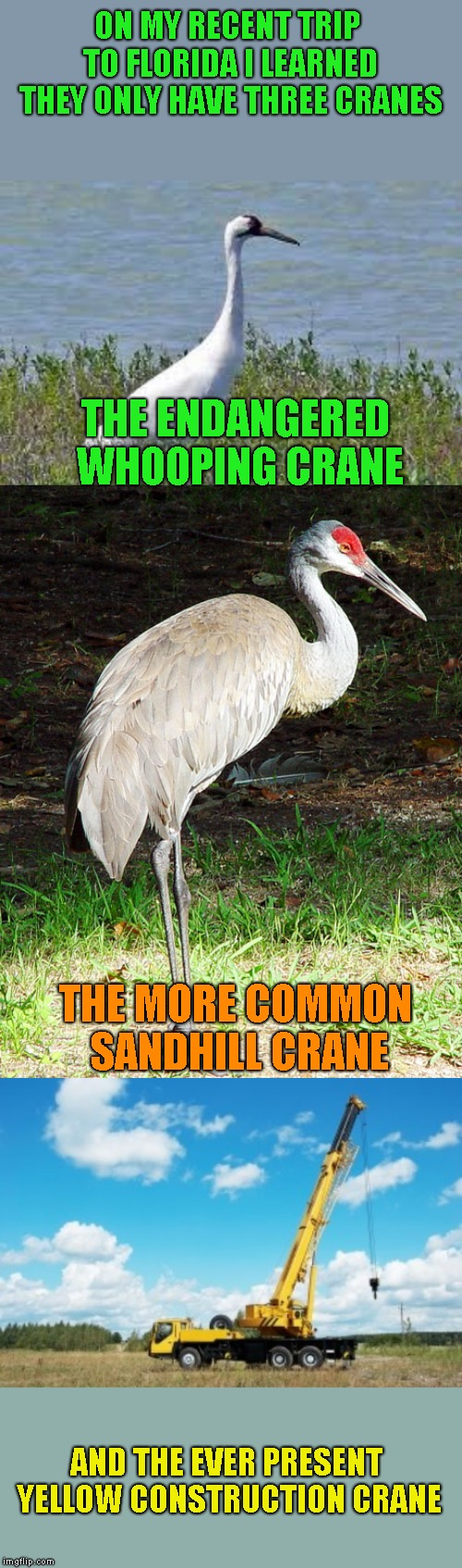 Not to be confused with Herons, Egrets and bulldozers |  ON MY RECENT TRIP TO FLORIDA I LEARNED THEY ONLY HAVE THREE CRANES; THE ENDANGERED WHOOPING CRANE; THE MORE COMMON SANDHILL CRANE; AND THE EVER PRESENT YELLOW CONSTRUCTION CRANE | image tagged in birds,stupid humor | made w/ Imgflip meme maker