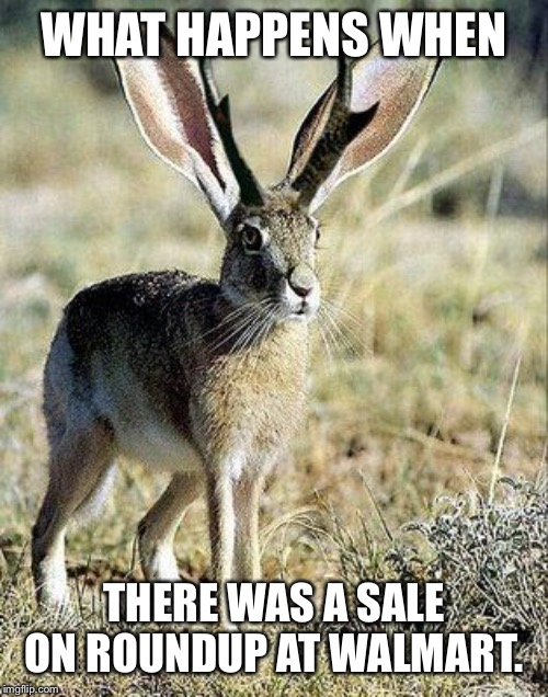 #rounduprabbit | WHAT HAPPENS WHEN THERE WAS A SALE ON ROUNDUP AT WALMART. | image tagged in farmer,monsanto,gmo,rabbit,lol | made w/ Imgflip meme maker