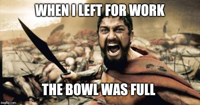 Sparta Leonidas Meme | WHEN I LEFT FOR WORK THE BOWL WAS FULL | image tagged in memes,sparta leonidas | made w/ Imgflip meme maker