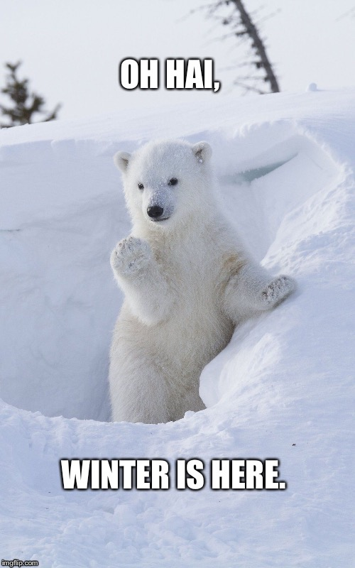 vabear morghulis | image tagged in game of thrones,polar bear,bear memes | made w/ Imgflip meme maker