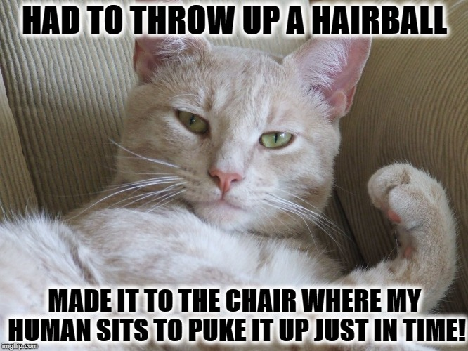 HAD TO THROW UP A HAIRBALL MADE IT TO THE CHAIR WHERE MY HUMAN SITS TO PUKE IT UP JUST IN TIME! | image tagged in just in time | made w/ Imgflip meme maker
