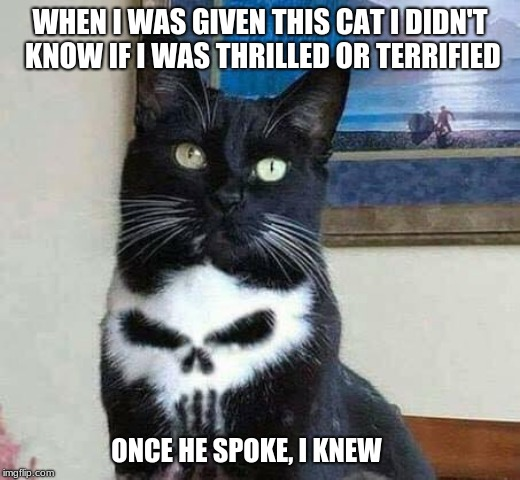 Some gifts are better than others | WHEN I WAS GIVEN THIS CAT I DIDN'T KNOW IF I WAS THRILLED OR TERRIFIED ONCE HE SPOKE, I KNEW | image tagged in punisher cat,evil cat,gifts,scary,skull | made w/ Imgflip meme maker