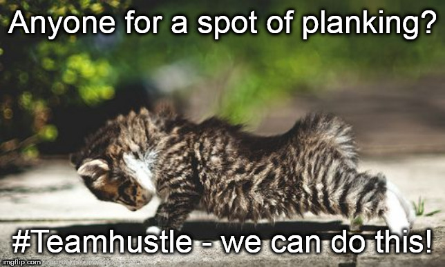 Cat Planking | Anyone for a spot of planking? #Teamhustle - we can do this! | image tagged in hustle,cat,planking,fitness | made w/ Imgflip meme maker