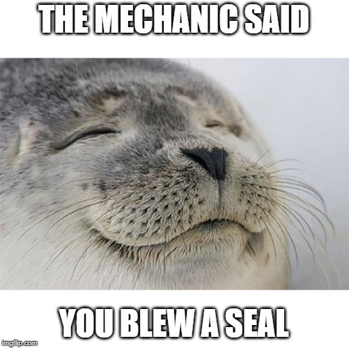 And don't he look happy? | THE MECHANIC SAID YOU BLEW A SEAL | image tagged in memes,satisfied seal,blew,mechanic | made w/ Imgflip meme maker
