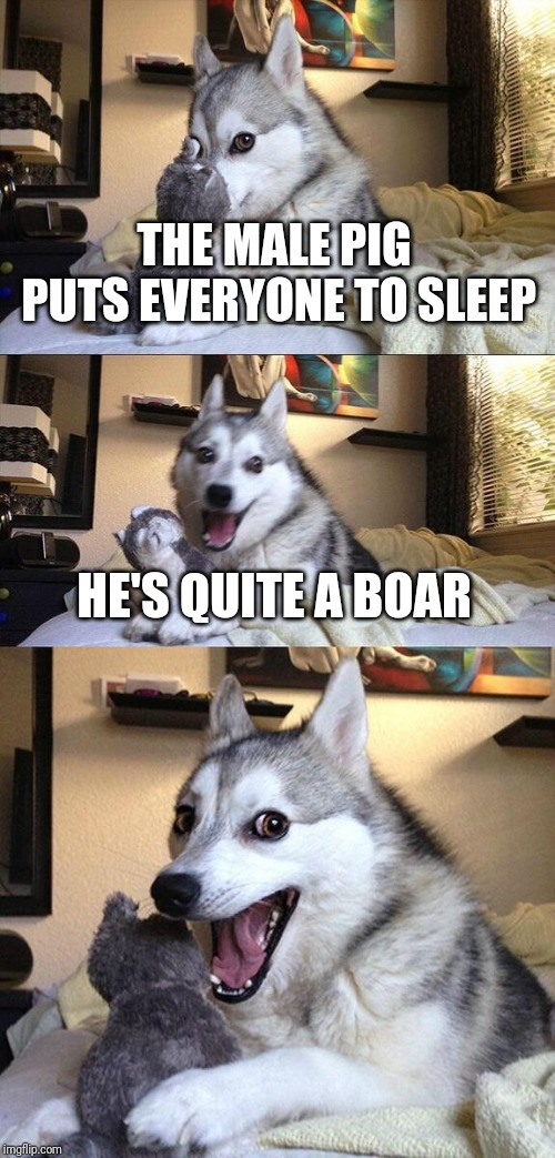Bad Pun Dog | THE MALE PIG PUTS EVERYONE TO SLEEP HE'S QUITE A BOAR | image tagged in memes,bad pun dog,pig,sleep,boar,puns | made w/ Imgflip meme maker