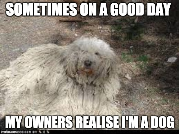 SOMETIMES ON A GOOD DAY MY OWNERS REALISE I'M A DOG | image tagged in dog meme | made w/ Imgflip meme maker