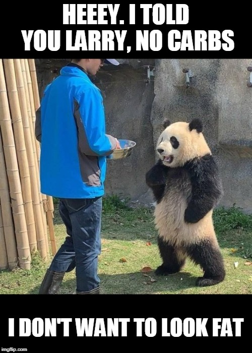 Picky Panda | HEEEY. I TOLD YOU LARRY, NO CARBS I DON'T WANT TO LOOK FAT | image tagged in panda,carbs,fat | made w/ Imgflip meme maker