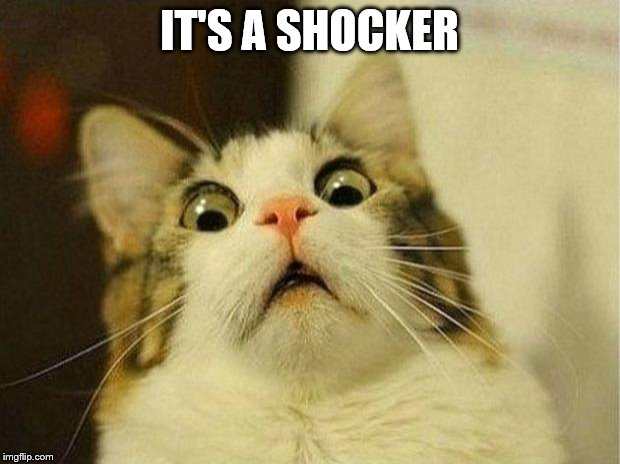 Scared Cat Meme | IT'S A SHOCKER | image tagged in memes,scared cat | made w/ Imgflip meme maker
