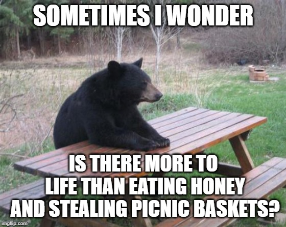 Bad Luck Bear | SOMETIMES I WONDER IS THERE MORE TO LIFE THAN EATING HONEY AND STEALING PICNIC BASKETS? | image tagged in memes,bad luck bear | made w/ Imgflip meme maker
