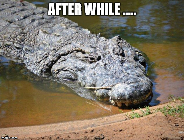 Crocodile | AFTER WHILE ..... | image tagged in crocodile | made w/ Imgflip meme maker