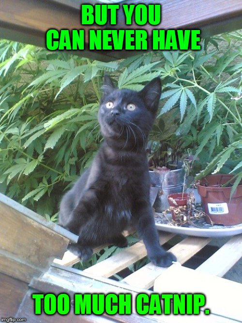 BUT YOU CAN NEVER HAVE TOO MUCH CATNIP. | made w/ Imgflip meme maker