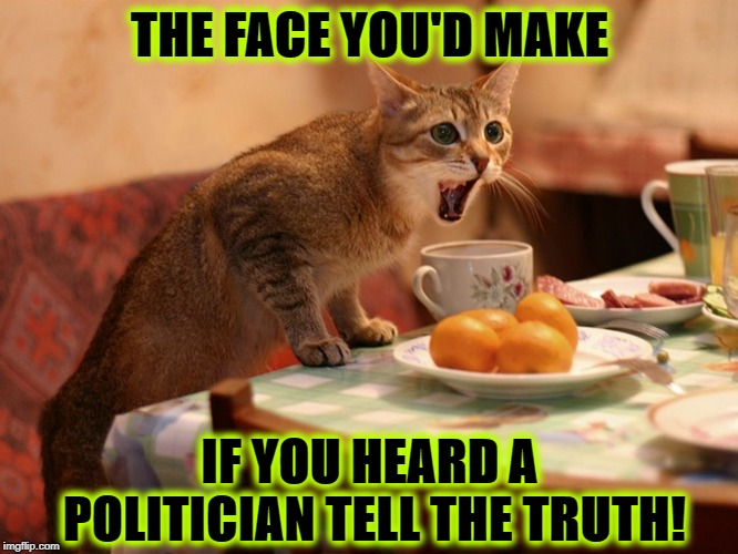 THE FACE YOU'D MAKE IF YOU HEARD A POLITICIAN TELL THE TRUTH! | image tagged in the face you'd make | made w/ Imgflip meme maker