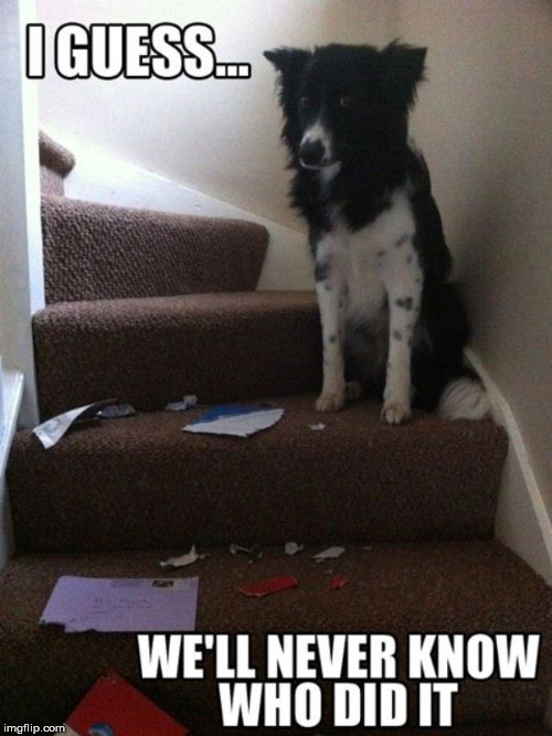 It is a mystery .... | image tagged in dogs,oh no you didn't,funny meme | made w/ Imgflip meme maker