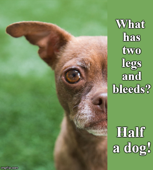 It's True |  What has two legs and bleeds? Half a dog! | image tagged in legs,two,bleeding,dog | made w/ Imgflip meme maker
