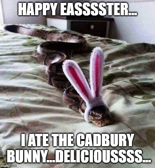 Easter Greetingssss | HAPPY EASSSSTER... I ATE THE CADBURY BUNNY...DELICIOUSSSS... | image tagged in easter,holiday,snake puns,easter bunny | made w/ Imgflip meme maker