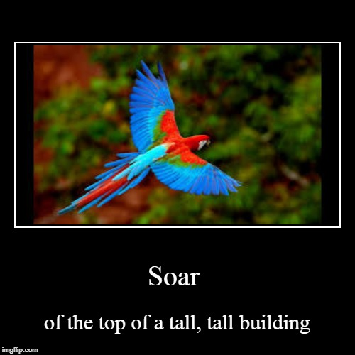 Soar | of the top of a tall, tall building | image tagged in funny,demotivationals | made w/ Imgflip demotivational maker