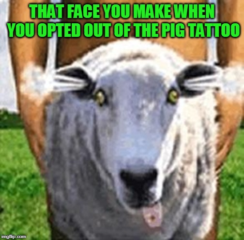 Sheepsex | THAT FACE YOU MAKE WHEN YOU OPTED OUT OF THE PIG TATTOO | image tagged in sheepsex | made w/ Imgflip meme maker