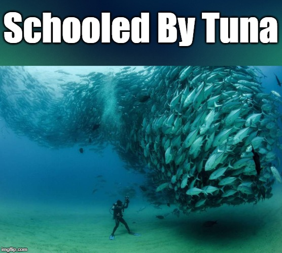 """Picture Is A Little Fishy""  Get Your Puns Ready For ""Pun Weekend"" Starting 19th-21st. A Triumph_9 & Craziness_all_the_way event 