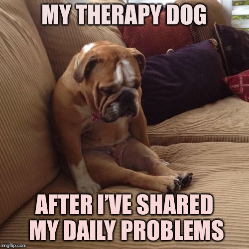 bulldogsad |  MY THERAPY DOG; AFTER I'VE SHARED MY DAILY PROBLEMS | image tagged in bulldogsad | made w/ Imgflip meme maker