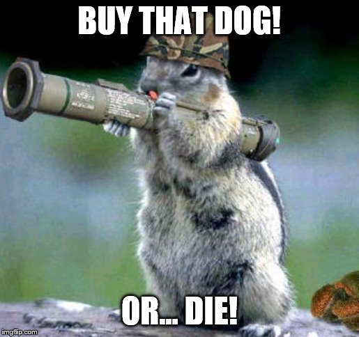 Bazooka Squirrel Meme | BUY THAT DOG! OR... DIE! | image tagged in memes,bazooka squirrel | made w/ Imgflip meme maker