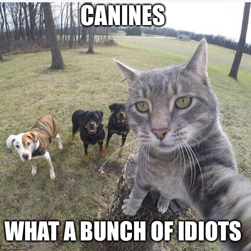 CANINES WHAT A BUNCH OF IDIOTS | image tagged in dogs,cats,funny animals,funny cats,funny dogs,funny | made w/ Imgflip meme maker