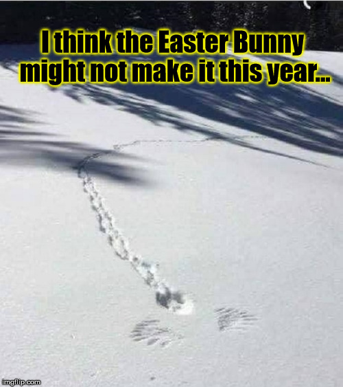 Ate The Easter Bunny |  I think the Easter Bunny might not make it this year... | image tagged in easter | made w/ Imgflip meme maker