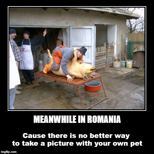 Cause there is no better way to take a picture with your own pet | MEANWHILE IN ROMANIA | image tagged in funny,demotivationals,pigs,romania | made w/ Imgflip demotivational maker