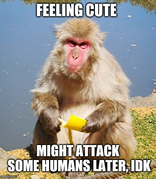 Feeling cute Monkey |  FEELING CUTE; MIGHT ATTACK SOME HUMANS LATER, IDK | image tagged in feeling cute,monkey,funny,memes,animals,banana | made w/ Imgflip meme maker