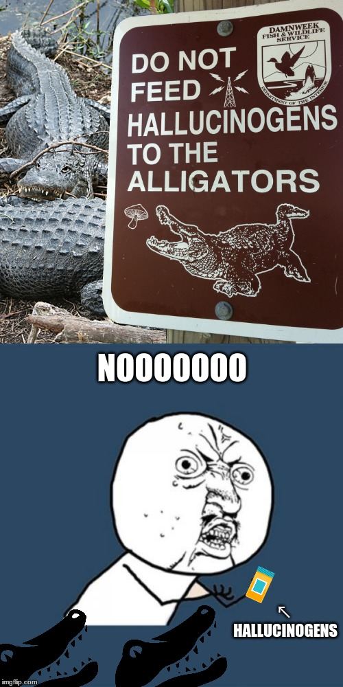 That stinks, I was gonna do it. (Dumb signs week April 17-23 a LordCheesus and DaBoilsMeAvery event) | NOOOOOOO ↖ HALLUCINOGENS | image tagged in memes,y u no,alligator,funny signs,funny,pointless signs | made w/ Imgflip meme maker