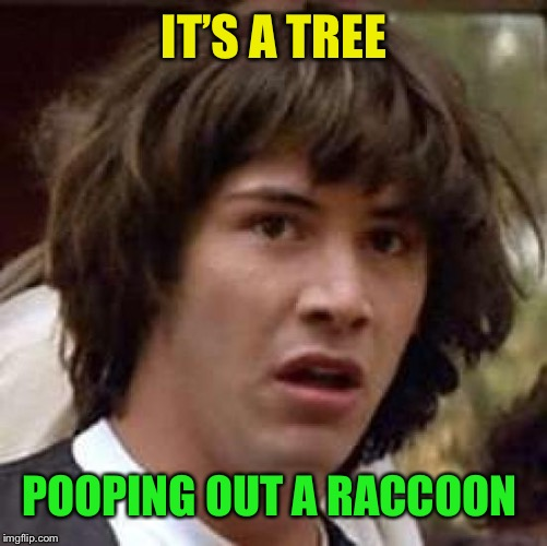 Conspiracy Keanu Meme | IT'S A TREE POOPING OUT A RACCOON | image tagged in memes,conspiracy keanu | made w/ Imgflip meme maker