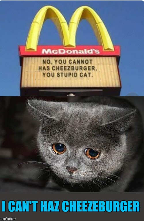 Repost Your Own Memes week, April 16 till we get bored (A Socrates and Craziness_all_the_way event) |  I CAN'T HAZ CHEEZEBURGER | image tagged in memes,i can has cheezburger cat,mcdonalds,44colt,repost your own memes week,sad cat | made w/ Imgflip meme maker