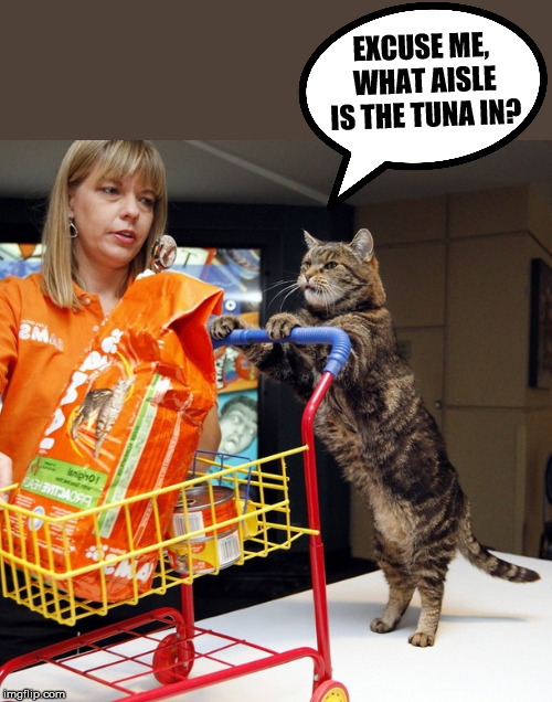 Cat shopping | EXCUSE ME, WHAT AISLE IS THE TUNA IN? | image tagged in cat,shopping,tuna | made w/ Imgflip meme maker