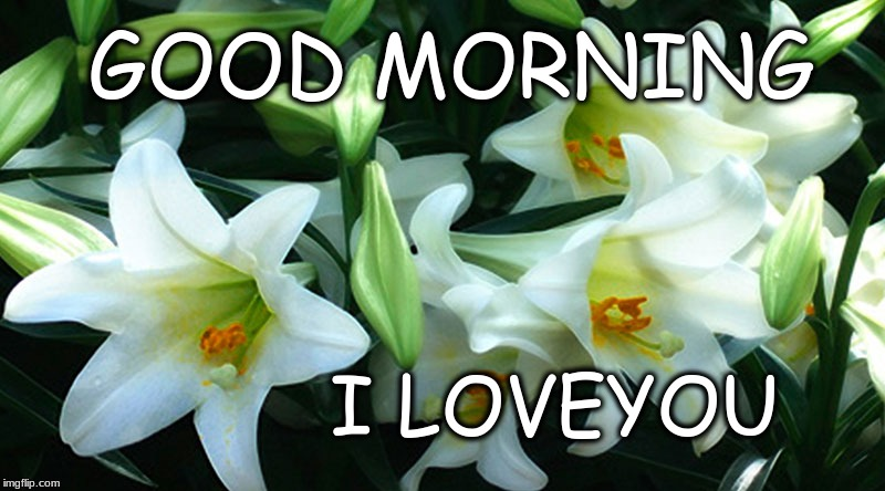 Image tagged in good morning,flowers,happy sunday - Imgflip