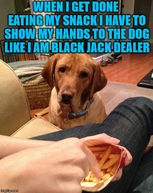 Be watched like a hawk |  WHEN I GET DONE EATING MY SNACK I HAVE TO SHOW MY HANDS TO THE DOG LIKE I AM BLACK JACK DEALER | image tagged in dogs,eating,funny meme,dealer,dog meme | made w/ Imgflip meme maker