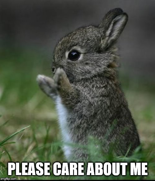Cute Bunny | PLEASE CARE ABOUT ME | image tagged in cute bunny | made w/ Imgflip meme maker