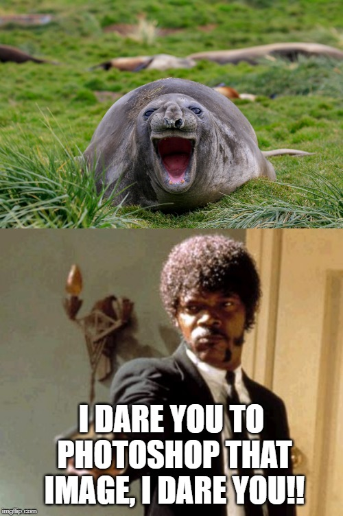 Add photoshops of the seal's face in the comments | I DARE YOU TO PHOTOSHOP THAT IMAGE, I DARE YOU!! | image tagged in memes,say that again i dare you | made w/ Imgflip meme maker