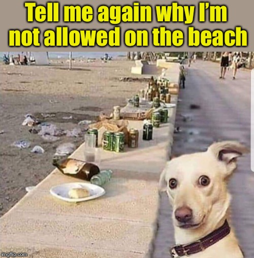 Irony | Tell me again why I'm not allowed on the beach | image tagged in memes,dogs,hypocrisy | made w/ Imgflip meme maker