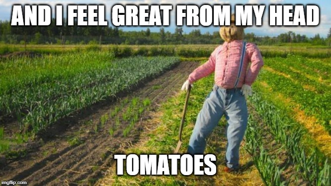 AND I FEEL GREAT FROM MY HEAD TOMATOES | made w/ Imgflip meme maker