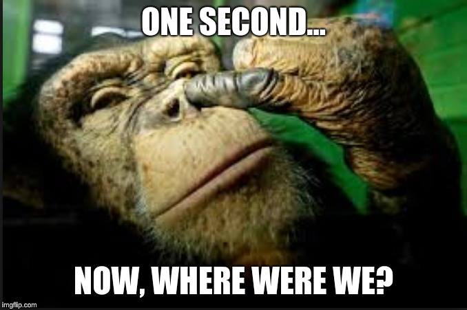 ONE SECOND... NOW, WHERE WERE WE? | image tagged in funny animals,awesome | made w/ Imgflip meme maker