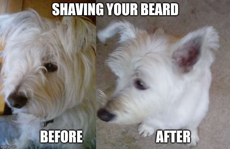 Shaving Your Beard |  SHAVING YOUR BEARD; BEFORE                            AFTER | image tagged in dog,beard,westie,man,olaf,funny | made w/ Imgflip meme maker