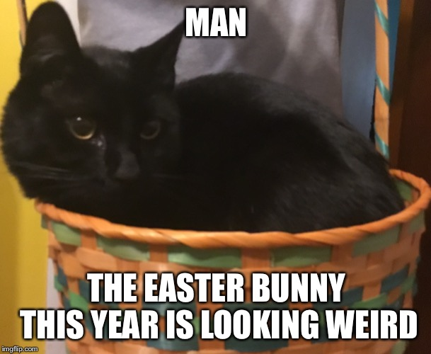 Silly kitty | MAN THE EASTER BUNNY THIS YEAR IS LOOKING WEIRD | image tagged in cats,cat,easter,happy easter,easter bunny,basket | made w/ Imgflip meme maker