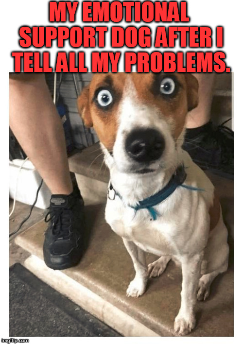 It is shocking |  MY EMOTIONAL SUPPORT DOG AFTER I TELL ALL MY PROBLEMS. | image tagged in emotional,support,dog | made w/ Imgflip meme maker