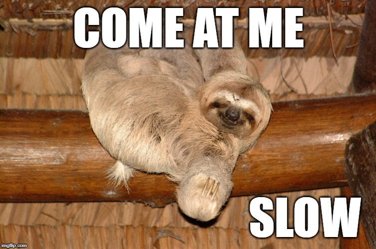 Come At Me Slow | COME AT ME SLOW | image tagged in come at me bro,sloth,slow | made w/ Imgflip meme maker